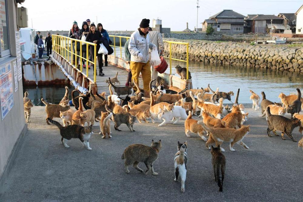 Đảo mèo, làng cáo và loạt vùng đất trên thế giới bị động vật chiếm giữ-3