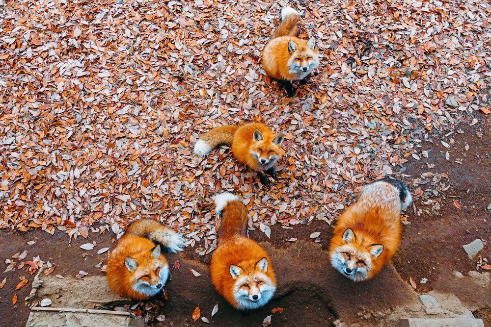 Đảo mèo, làng cáo và loạt vùng đất trên thế giới bị động vật chiếm giữ-4