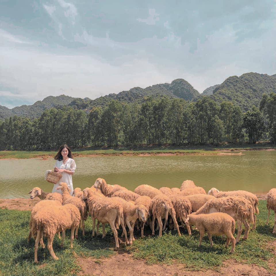 Nghìn góc sống ảo chỉ tốn có 50k đẹp như tranh ở đồng cừu Ninh Bình-6