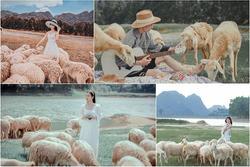 Nghìn góc sống ảo chỉ tốn có 50k 'đẹp như tranh' ở đồng cừu Ninh Bình