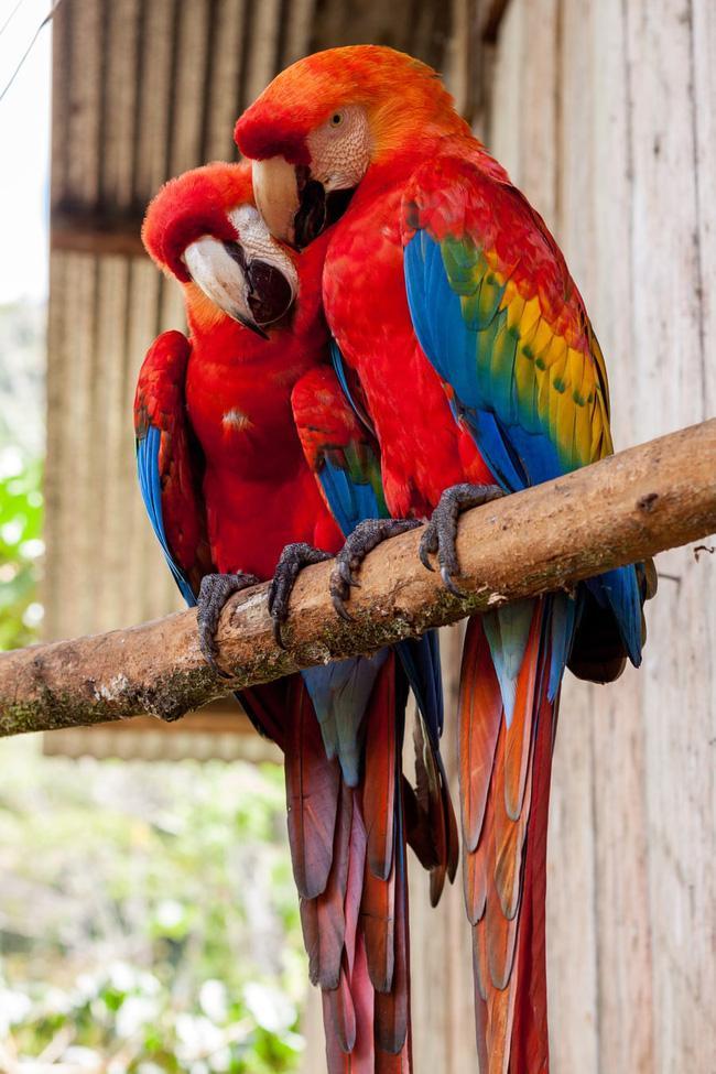 Chim bay vào cửa sổ tiết lộ cuộc sống sắp tới gặp chướng ngại hay may mắn bình an?-4