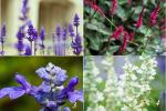 Chọn loài hoa thích nhất để biết khuyết điểm chí mạng của bạn