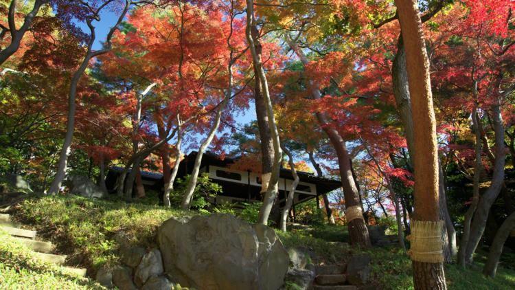 Những công viên đẹp nhất thủ đô Tokyo-5