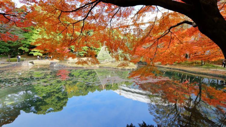 Những công viên đẹp nhất thủ đô Tokyo-6