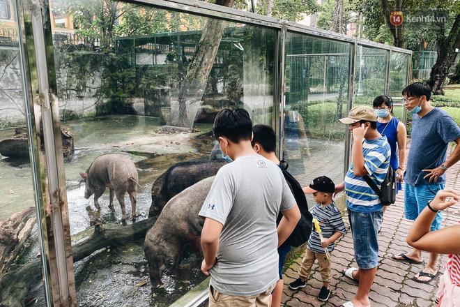 Người Sài Gòn góp cả chục tấn rau củ cùng hàng tỷ đồng, cứu đói bầy thú ở Thảo Cầm Viên trong mùa dịch Covid-19-3
