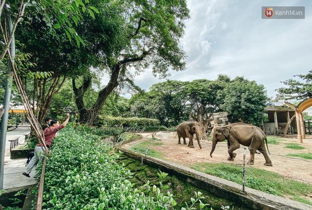 Người Sài Gòn góp cả chục tấn rau củ cùng hàng tỷ đồng, cứu đói bầy thú ở Thảo Cầm Viên trong mùa dịch Covid-19-11
