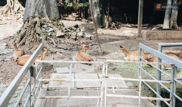 Người Sài Gòn góp cả chục tấn rau củ cùng hàng tỷ đồng, cứu đói bầy thú ở Thảo Cầm Viên trong mùa dịch Covid-19-9