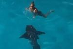 Du khách thoát hiểm khi gặp cá mập