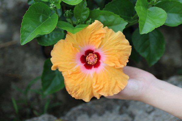 Những loại hoa đẹp không nên rước vào nhà trong tháng 7 âm, bất ngờ nhất là số 3-3
