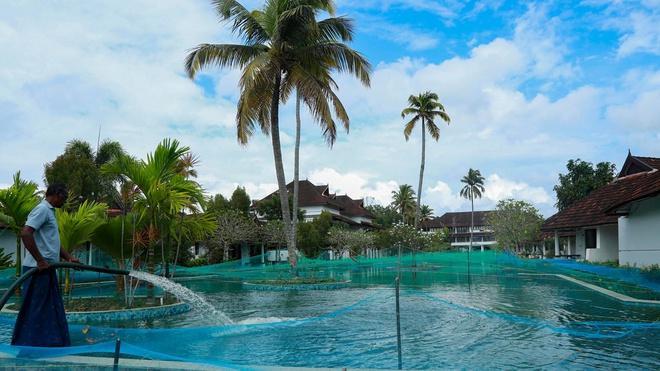 Khu nghỉ dưỡng Ấn Độ biến hồ bơi thành bể nuôi cá-1