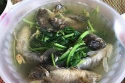 Dâu đảm nấu canh cá rô cho mẹ chồng, nhìn thành quả y hệt cá chết trong ao