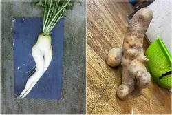 Đỏ mặt với 'ngoại hình' không giống ai của các loại rau củ quả