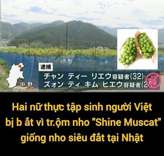 2 thực tập sinh người Việt ở Nhật bị bắt vì vào vườn ăn trộm nho-1