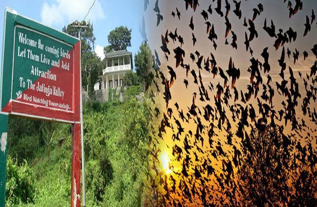 Chuyện rùng rợn về ngôi làng bí ẩn hàng ngàn con chim tự sát, 100 năm đau đầu tìm lời giải-1