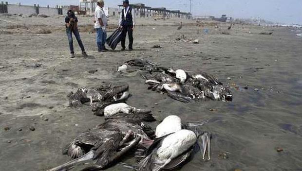 Chuyện rùng rợn về ngôi làng bí ẩn hàng ngàn con chim tự sát, 100 năm đau đầu tìm lời giải-3