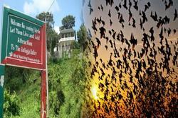 Chuyện rùng rợn về ngôi làng bí ẩn hàng ngàn con chim 'tự sát', 100 năm đau đầu tìm lời giải