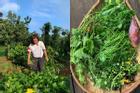 Xem H'Hen Niê thu hoạch rau củ, ai cũng thích được về Tây Nguyên