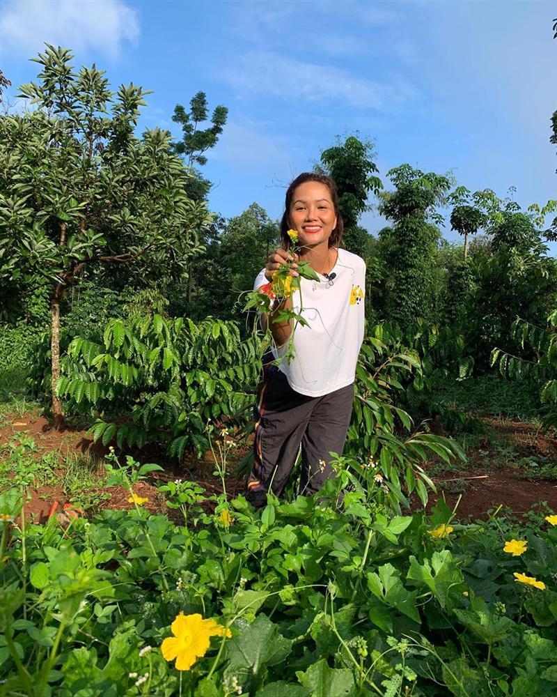 Xem HHen Niê thu hoạch rau củ, ai cũng thích được về Tây Nguyên-3