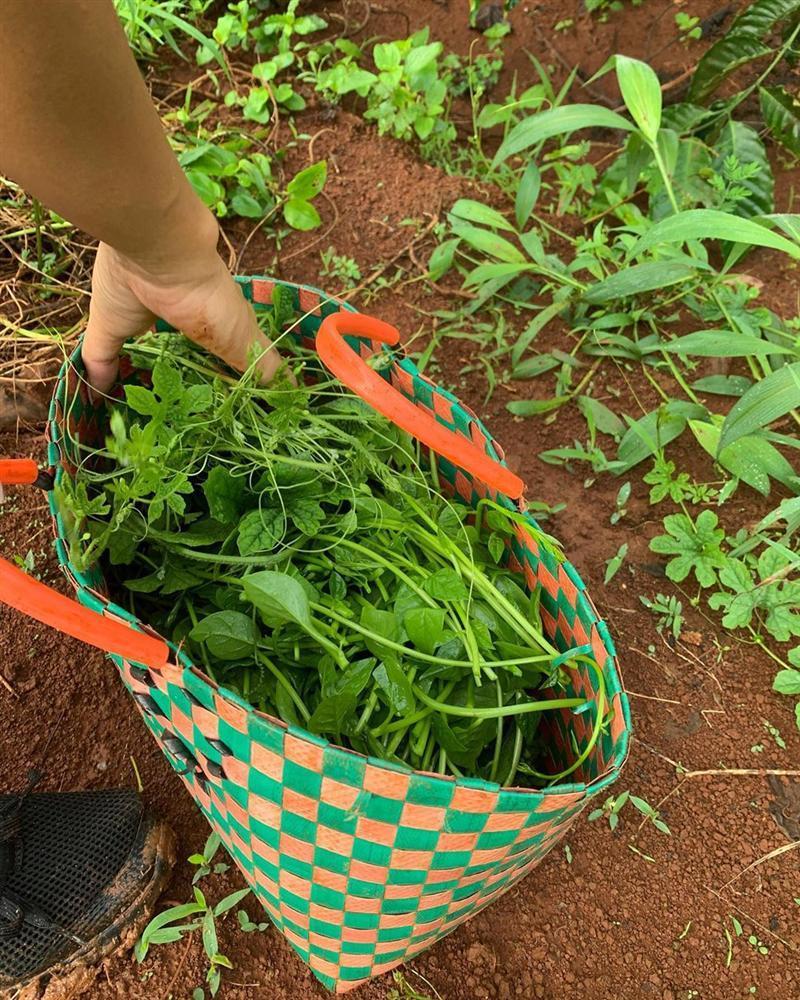 Xem HHen Niê thu hoạch rau củ, ai cũng thích được về Tây Nguyên-5