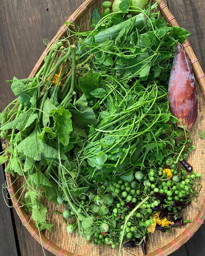 Xem HHen Niê thu hoạch rau củ, ai cũng thích được về Tây Nguyên-6