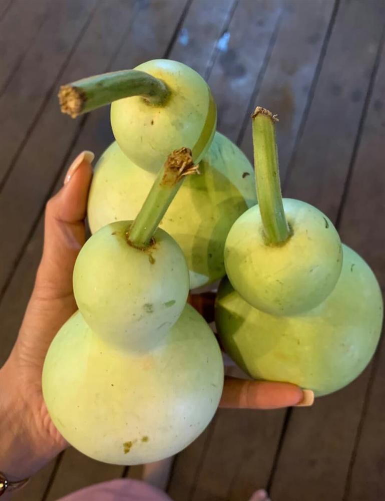 Xem HHen Niê thu hoạch rau củ, ai cũng thích được về Tây Nguyên-7