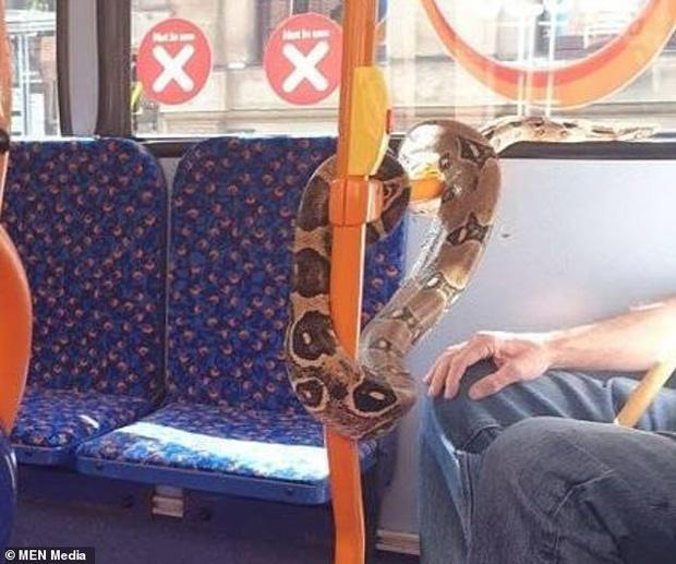 Kinh hãi người đàn ông quấn trăn quanh cổ thay cho việc đeo khẩu trang trên xe bus-2
