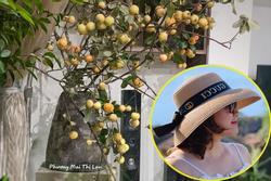 Học lỏm cách cắm cành táo mèo của mẹ Hà Nội, nhìn 'đẹp như tranh' bảo sao 'bão like'