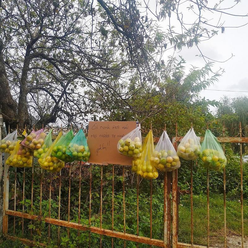 Ổi chín cây treo trước cổng mời mọi người ăn miễn phí ở Đà Lạt khiến dân tình xao xuyến-1