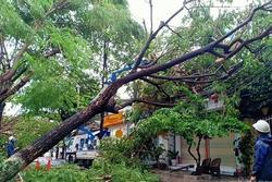 Bão vào đất liền quật cây cối nhà cửa ngổn ngang, người đi đường bị hất văng ngã nhào