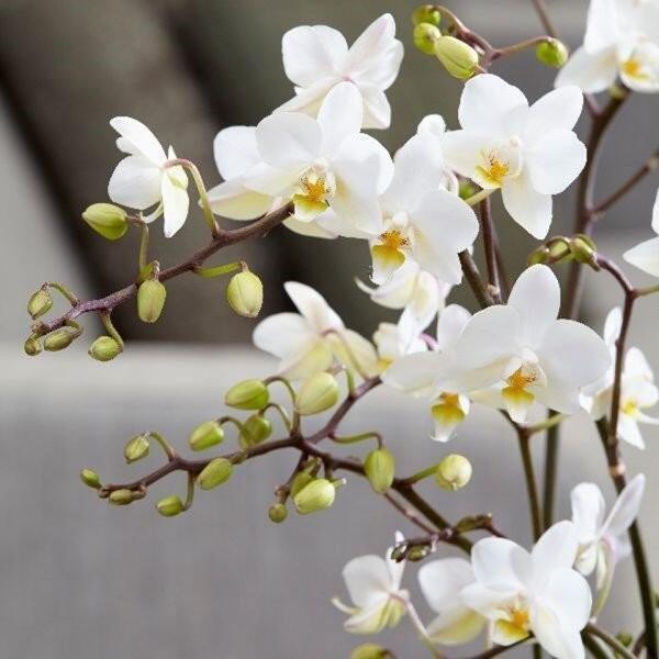 8 loại cây hoa nhà giàu hay chơi, đặt phòng khách cực hợp phong thủy-1