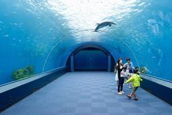 Đường hầm dưới nước chiếu sáng các sinh vật biển