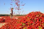 Cánh đồng ớt đỏ rực một vùng tại Trung Quốc