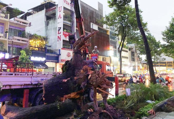 Gia cảnh nạn nhân bị cây xanh đè tử vong ở Sài Gòn: 2 vợ chồng thất nghiệp, con chưa đầy 4 tuổi-5