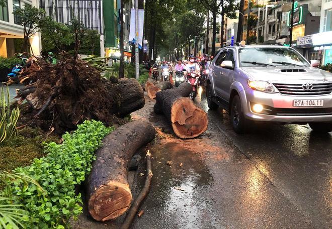 Gia cảnh nạn nhân bị cây xanh đè tử vong ở Sài Gòn: 2 vợ chồng thất nghiệp, con chưa đầy 4 tuổi-6