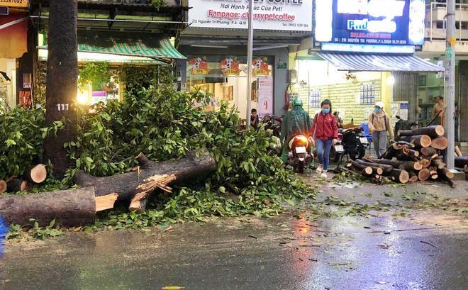 Gia cảnh nạn nhân bị cây xanh đè tử vong ở Sài Gòn: 2 vợ chồng thất nghiệp, con chưa đầy 4 tuổi-7