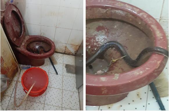 Lò bánh mì Sài Gòn bị tố dùng thịt bẩn làm nhân: Chủ lò không biết bé na ở đâu ra-1