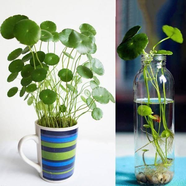 3 loài hoa thịnh vượng, điềm lành và sung túc trồng trong nhà không phải ai cũng biết-3