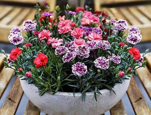3 loài hoa thịnh vượng, điềm lành và sung túc trồng trong nhà không phải ai cũng biết-5