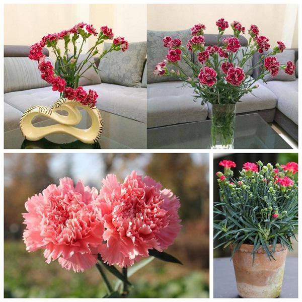 3 loài hoa thịnh vượng, điềm lành và sung túc trồng trong nhà không phải ai cũng biết-6