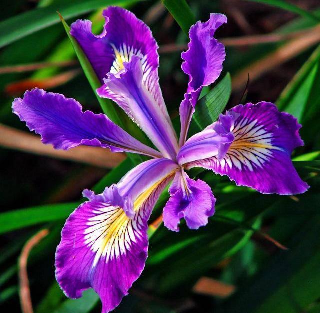 3 loài hoa thịnh vượng, điềm lành và sung túc trồng trong nhà không phải ai cũng biết-9