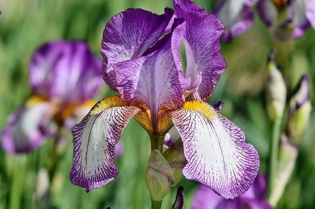 3 loài hoa thịnh vượng, điềm lành và sung túc trồng trong nhà không phải ai cũng biết-10