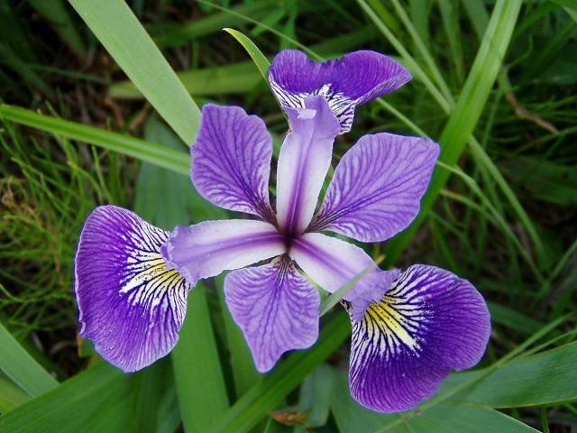 3 loài hoa thịnh vượng, điềm lành và sung túc trồng trong nhà không phải ai cũng biết-11