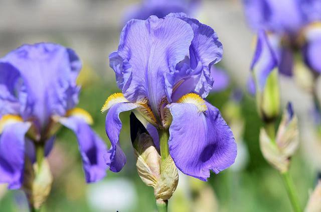 3 loài hoa thịnh vượng, điềm lành và sung túc trồng trong nhà không phải ai cũng biết-12