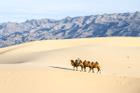 Sa mạc dễ đi khó về ở Trung Quốc