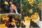 Ghé thăm Đà Lạt, rong ruổi những cung đường hoa dã quỳ đẹp nhất vào tháng 10