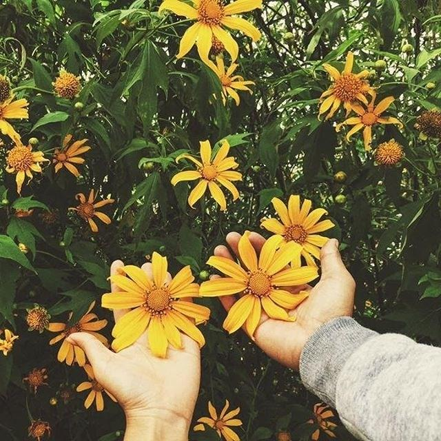 Ghé thăm Đà Lạt, rong ruổi những cung đường hoa dã quỳ đẹp nhất vào tháng 10-2