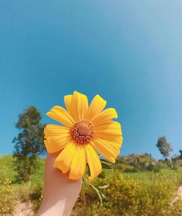 Ghé thăm Đà Lạt, rong ruổi những cung đường hoa dã quỳ đẹp nhất vào tháng 10-3