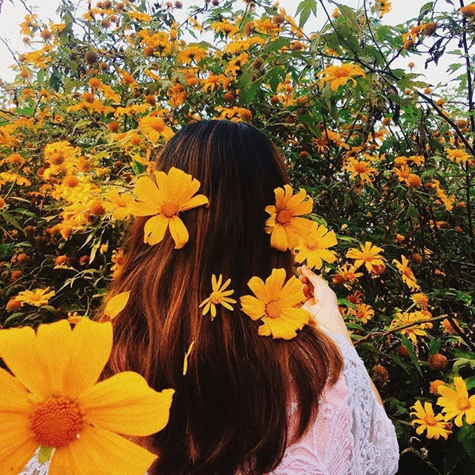 Ghé thăm Đà Lạt, rong ruổi những cung đường hoa dã quỳ đẹp nhất vào tháng 10-6