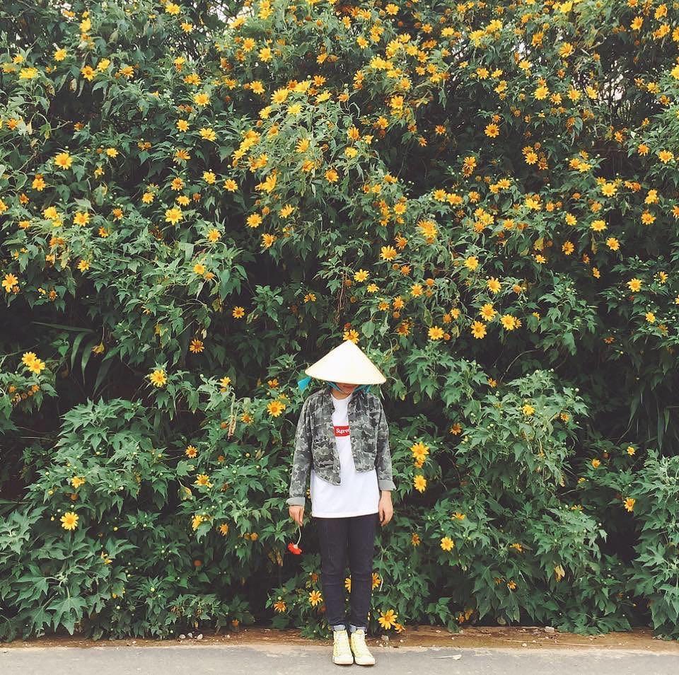 Ghé thăm Đà Lạt, rong ruổi những cung đường hoa dã quỳ đẹp nhất vào tháng 10-7