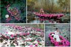 Ngược dòng suối Yến ngắm hoa súng nở rộ tím hồng một góc trời